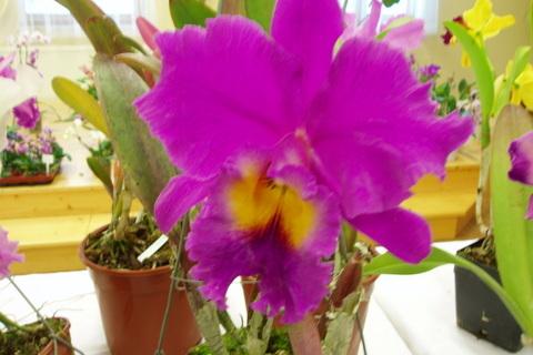 FOTKA - orchideje,,,,,,,