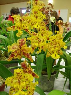 FOTKA - orchideje,,,,,,,,,