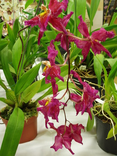 FOTKA - orchideje,,,,,,,,,,