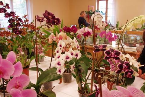 FOTKA - orchideje.