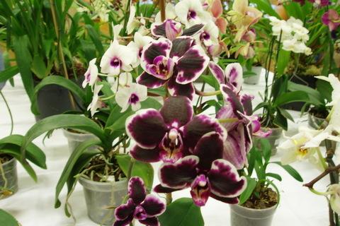 FOTKA - orchideje..