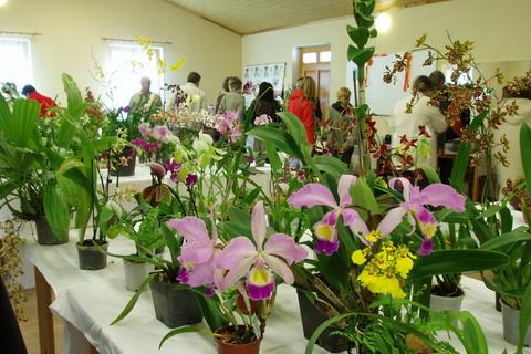 FOTKA - orchideje....