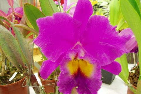 FOTKA - orchideje.....