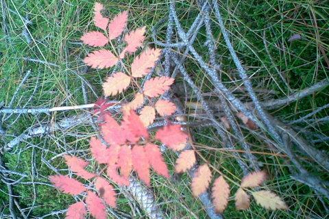 FOTKA - Kouzelná rostlinka - barvy podzimu