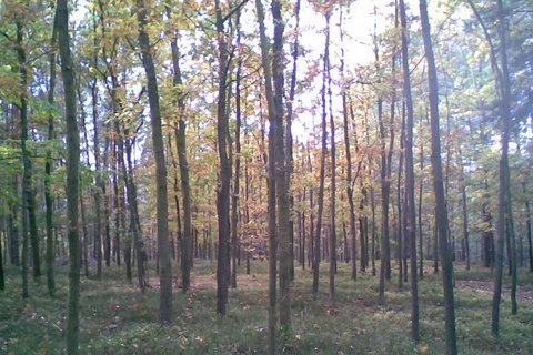 FOTKA - Dubový les v podzimním róbě
