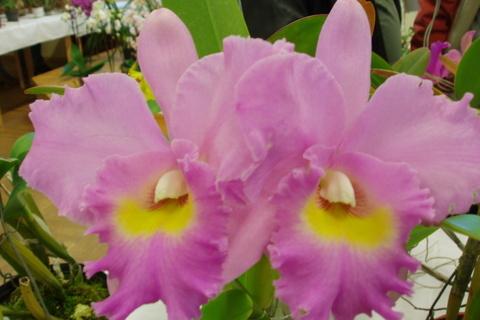 FOTKA - orchideje......