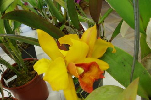 FOTKA - orchideje.......