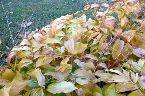 FOTKA - podzimní usýchání