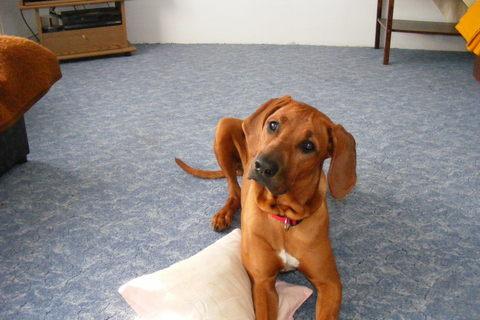 FOTKA - psí slečna