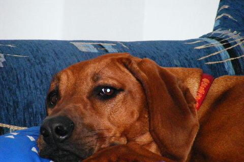 FOTKA - psí pohoda