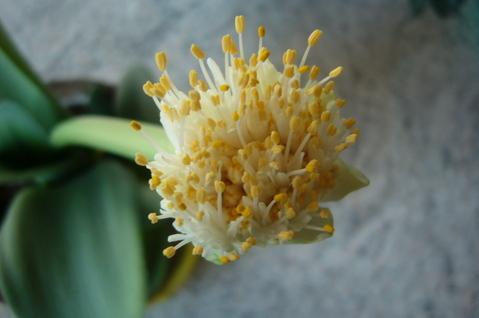 FOTKA - Detail květu
