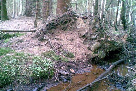 FOTKA - Lesní potok
