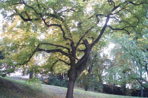 FOTKA - podzim krásný strom