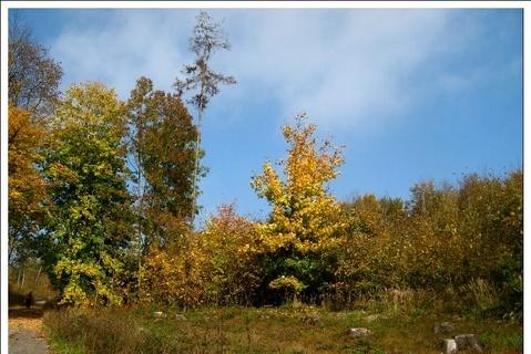 FOTKA - Podzim v lese