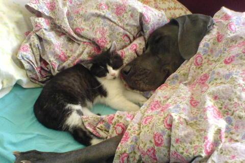 FOTKA - Mia a kot�