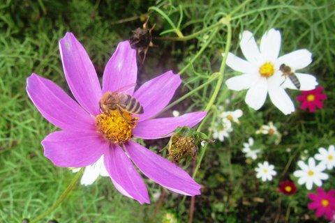 FOTKA - V září foceno na zahradě