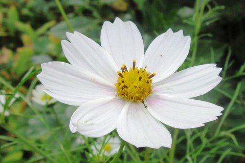 FOTKA - V září foceno u nás na zahradě