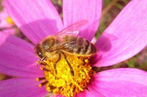 FOTKA - v říjnu foceno..včela