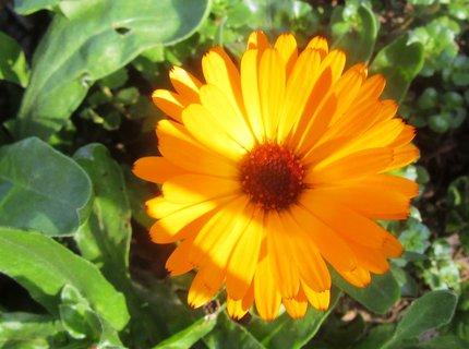 FOTKA - na zahradě v říjnu