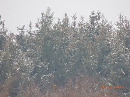 FOTKA - Sněhem ozdobené  smrčky v dálce 19.12.