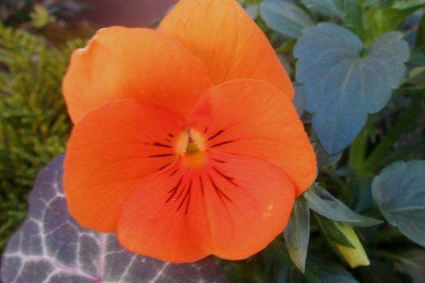 FOTKA - malá oranžová