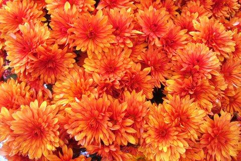 FOTKA - listopadové z květináče