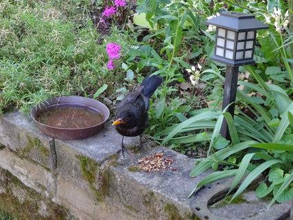 FOTKA - Tak se krmí na terase