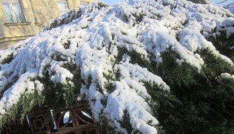 FOTKA - páteční sníh