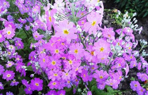 FOTKA - jarní květina