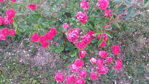 FOTKA - má hodně květů