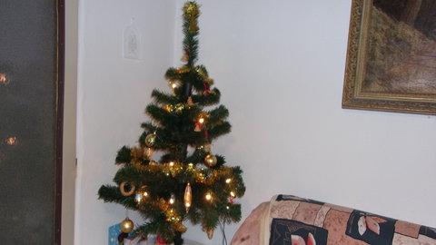 FOTKA - Vánoční stromek