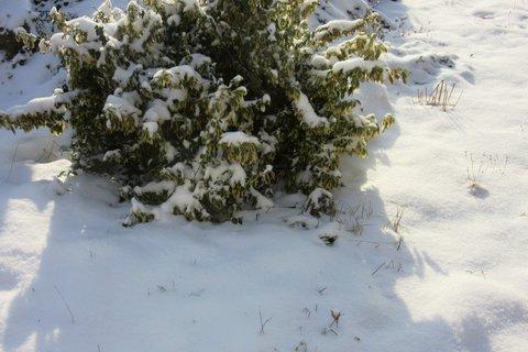 FOTKA - loňský sníh