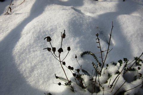 FOTKA - loňský třpytivý sníh