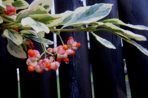 FOTKA - prosincová větvička