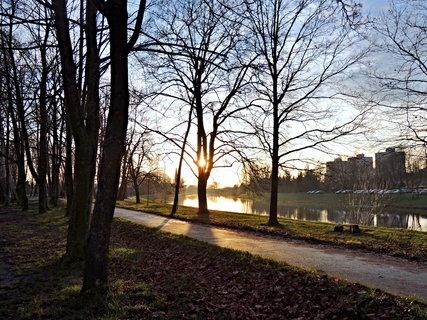 FOTKA - sluníčko za stromem