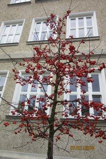 FOTKA - strom- 7.ledna na procházce