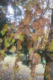 FOTKA - listopadové listí