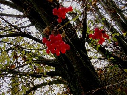 FOTKA - z podzimní proch.