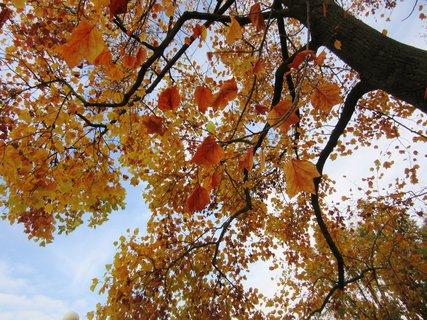 FOTKA - z podzimní procház.