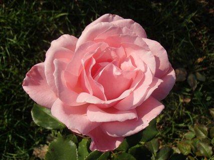 FOTKA - pekná jemne ružová
