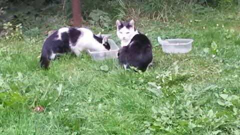 FOTKA - jedna jí a druhá hlídá