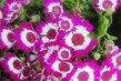 Jarní kvítečka v květináči