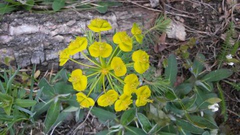 FOTKA - květ složený z menších květů