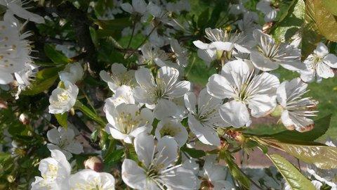 FOTKA - rozkvetlá jarní krása
