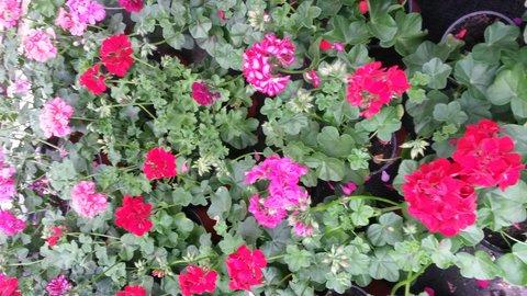 FOTKA - v zahradnictví