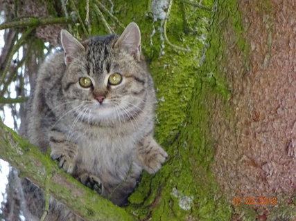 FOTKA - Vystrašené kotě na stromě