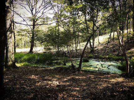 FOTKA - Vzpomínky na courání lesem a hledání hub.