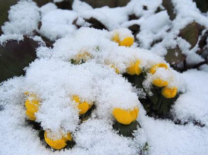 FOTKA - Talovíny v pátek zima přikryla sněhovou pokrývkou