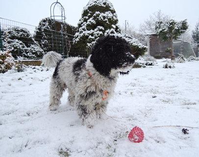 FOTKA - zimní hrátky psího miláčka