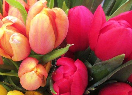 FOTKA - zářivé tulipány